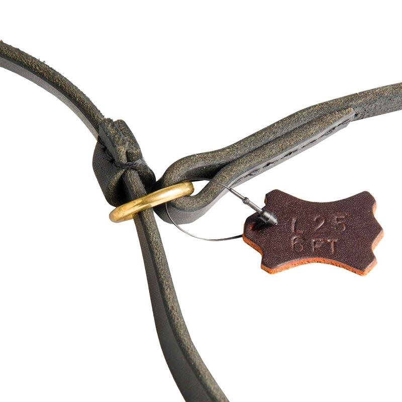 Durable Leash and Choke Collar Dog Equipment